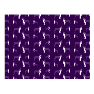 Purple boston terrier postcard
