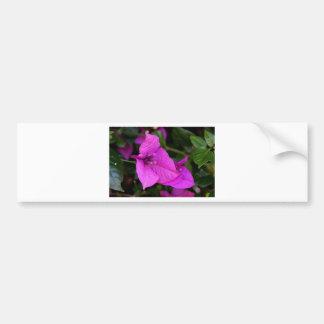 Purple Bougainvillea flower in bloom Bumper Sticker