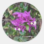Purple Bougainvillea Photo