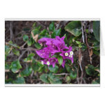 Purple Bougainvillea Photo Cards