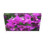 Purple bougainvillea stretched canvas prints