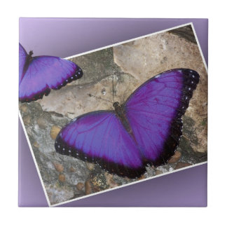 Purple Butterflies Small Square Tile
