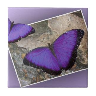 Purple Butterflies Tile