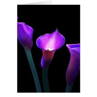 purple calla lily card