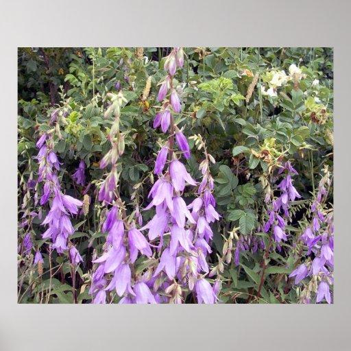 Purple Canterbury Bells 1 Poster