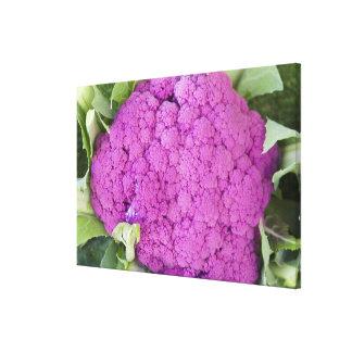 Purple cauliflower for sale canvas print