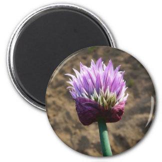 Purple Chive Flower in Bloom 6 Cm Round Magnet