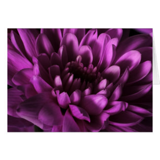 Purple Chrysanthemum Card