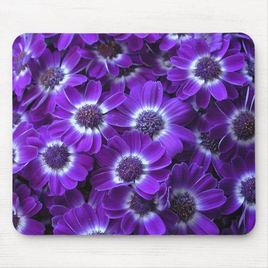 Purple Cineraria Mouse Mat