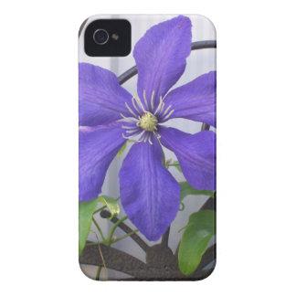 Purple Clematis iPhone 4 Cases