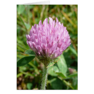 Purple Clover Card