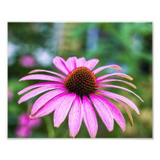 Purple Cone Flower Print Photo Art