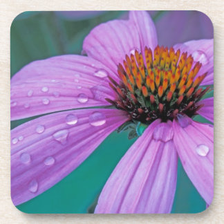 Purple Cone flower with water drops Drink Coaster