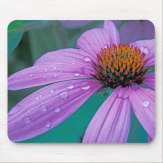 Purple Cone flower with water drops Mousepads