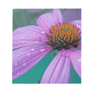 Purple Cone flower with water drops Notepad
