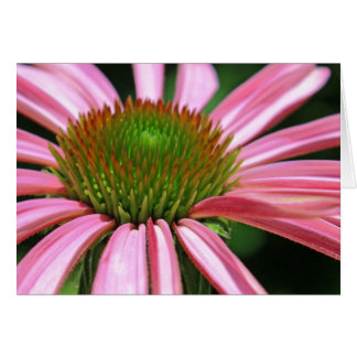 Purple Coneflower Card