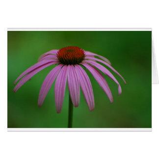 Purple Coneflower Card