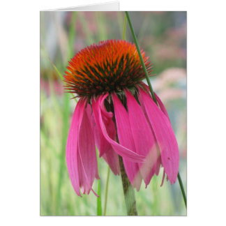 Purple Coneflower Note Card