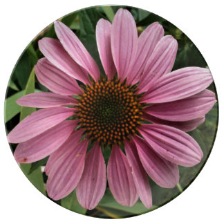 Purple Coneflower Porcelain Plate