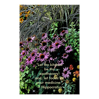 Purple Coneflower Posters