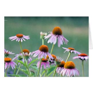 Purple coneflowers! card