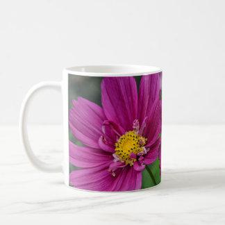 Purple cosmos flowers coffee mug