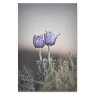 Purple Crocus at Sunset Tissue Paper