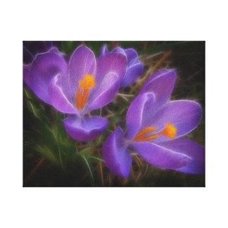 Purple Crocus Canvas Print