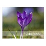 Purple Crocus DSC0704 Postcard