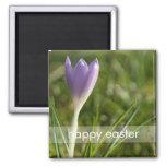 Purple Crocus DSC5082 Magnets
