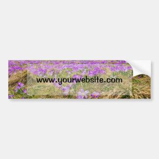 Purple Crocus Flower Field, Nature, Floral Bumper Sticker