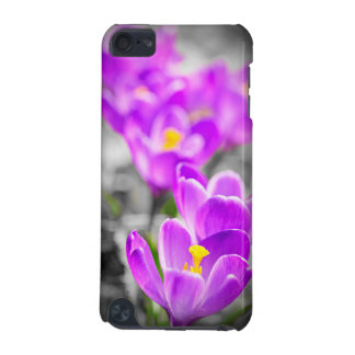 Purple crocus flowers iPod touch 5G covers