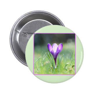 Purple Crocus in spring 03.3 6 Cm Round Badge