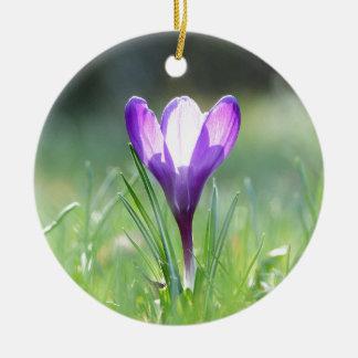 Purple Crocus in spring 03.3 Round Ceramic Decoration