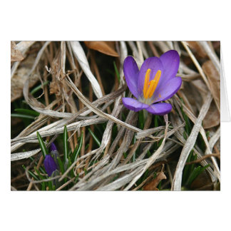 Purple Crocus Notecard