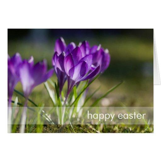 Purple Crocuses DSC0703 Greeting Card