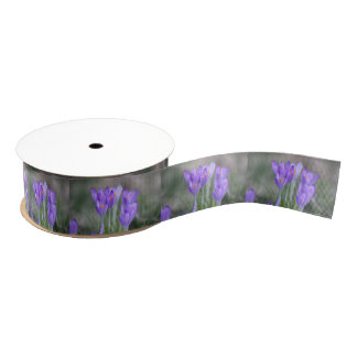 Purple crocuses grosgrain ribbon