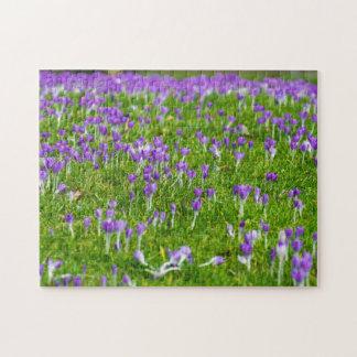 Purple crocuses photo puzzle