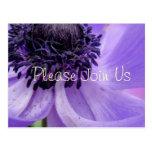 Purple Curls Post Card