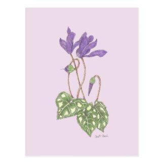 Purple Cyclamen Postcard