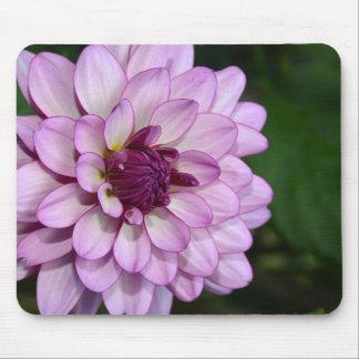 Purple dahlia flower blossoms mousepad