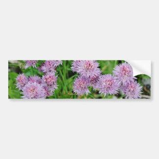Purple Dahlia Flowers Growing Car Bumper Sticker