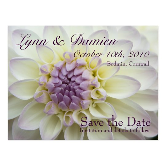 Purple Dahlia • Save the Date Postcard