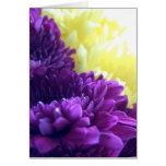 Purple Dahlias Greeting Cards