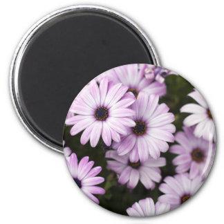 Purple Daisies 6 Cm Round Magnet
