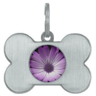 Purple Daisy Flower Pet Tag