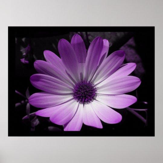 Purple Daisy Flower Print