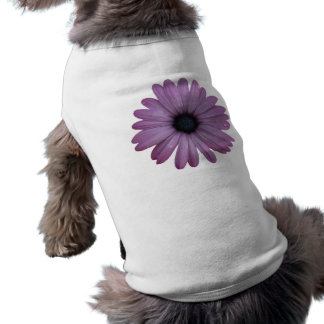 Purple Daisy Like Flower Osteospermum ecklonis Shirt