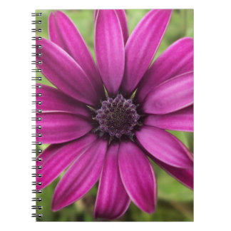 Purple Daisy Notebook