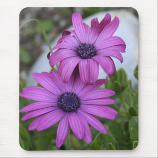Purple Daisy Osteospermum Flowers Mouse Pad